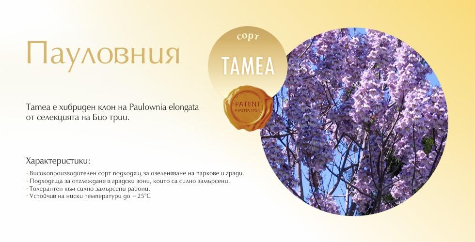 Tamea
