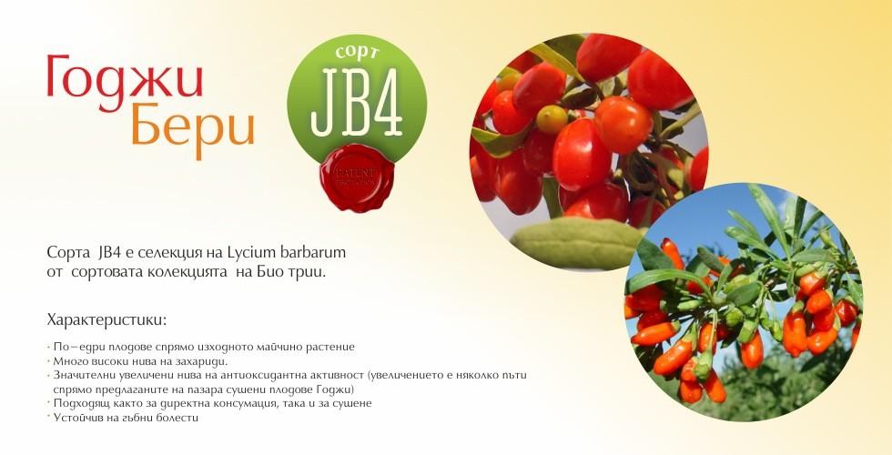 Сорт JB4 – Годжи Бери