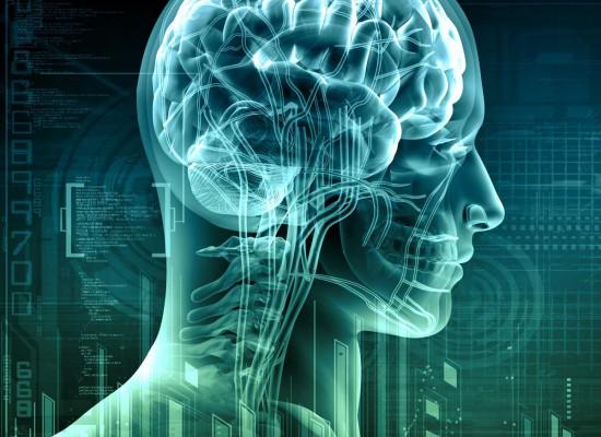 brain-550x400
