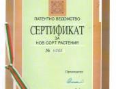 Patent-JB1