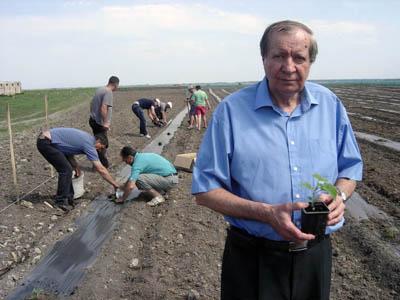 Плантация в Суботица, Сърбия април 2012г